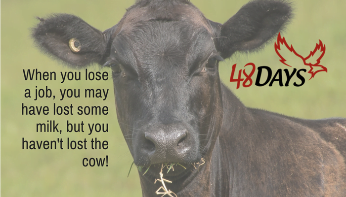 "There's an old Texas saying: ""It doesn't matter how much milk you spill as long as you don't lose your cow."" Is losing your job the milk or the cow?"